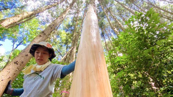 【イベント終了】2021/8/29(日)きらめ樹間伐イベント@兵庫県丹波市シェアビレッジ